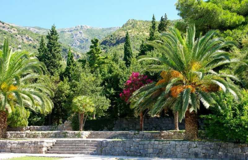0909141214351 1024x663 e1522346496778 - Ботанический сад Милочер - кусочек Африки среди горных Балкан