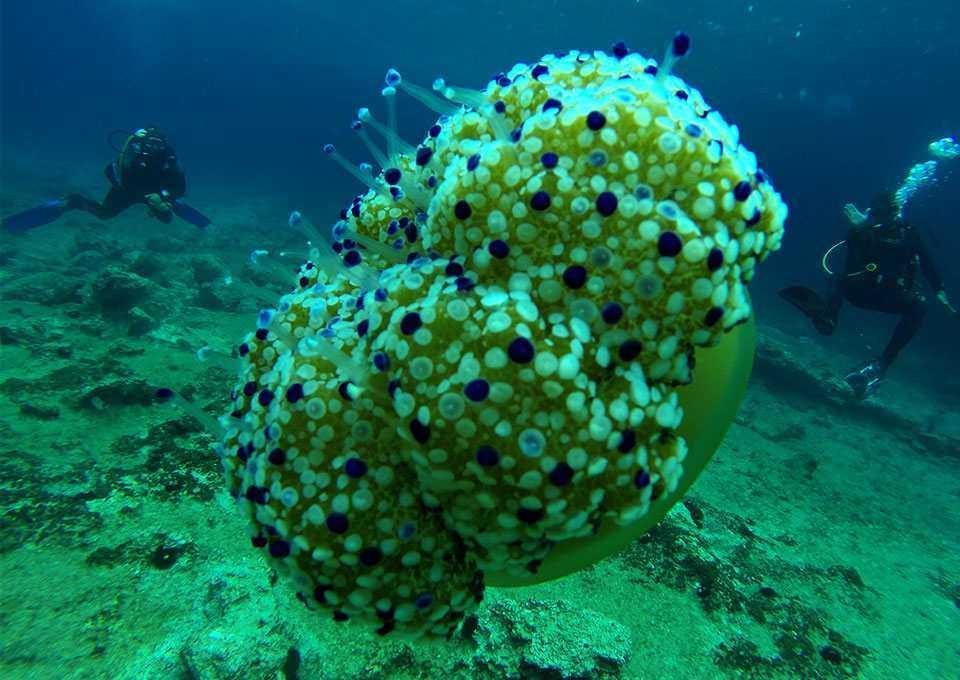 diving montenegro underwater world ru - Дайвинг в Черногории