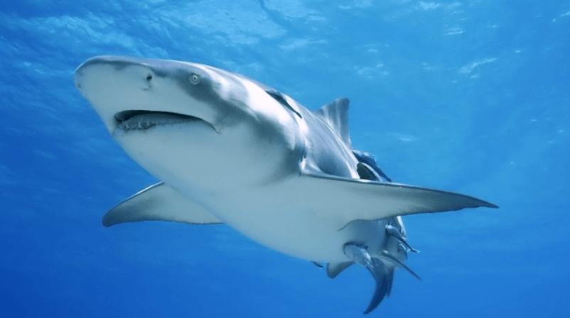 Акулы в Черногории