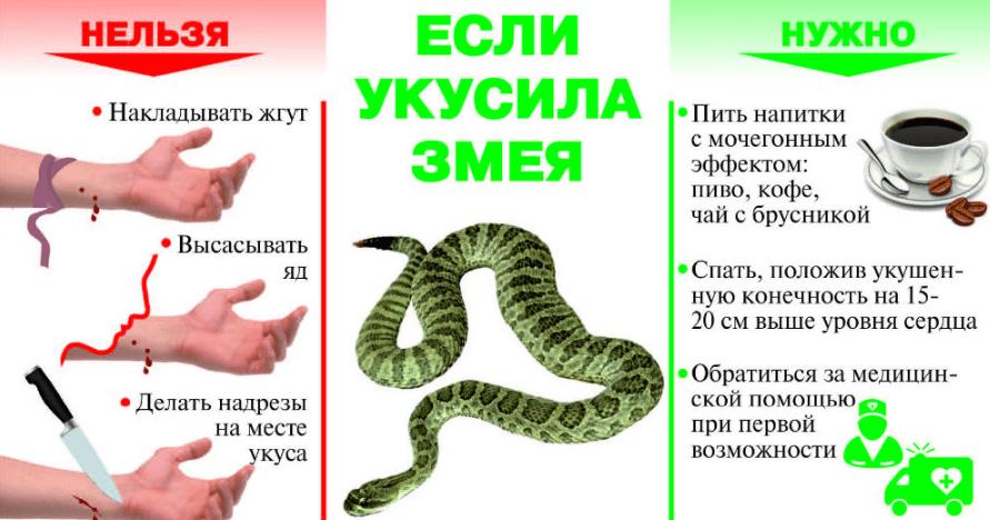 Змеи в Черногории