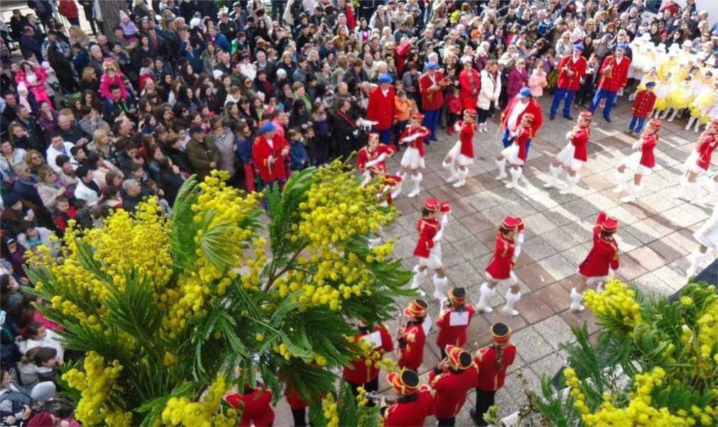 Фестиваль мимозы в Герцег-Нови